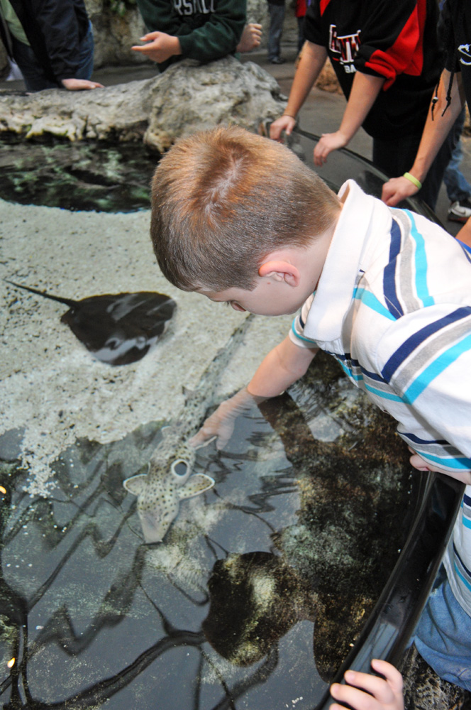 Stingrays and small sharks